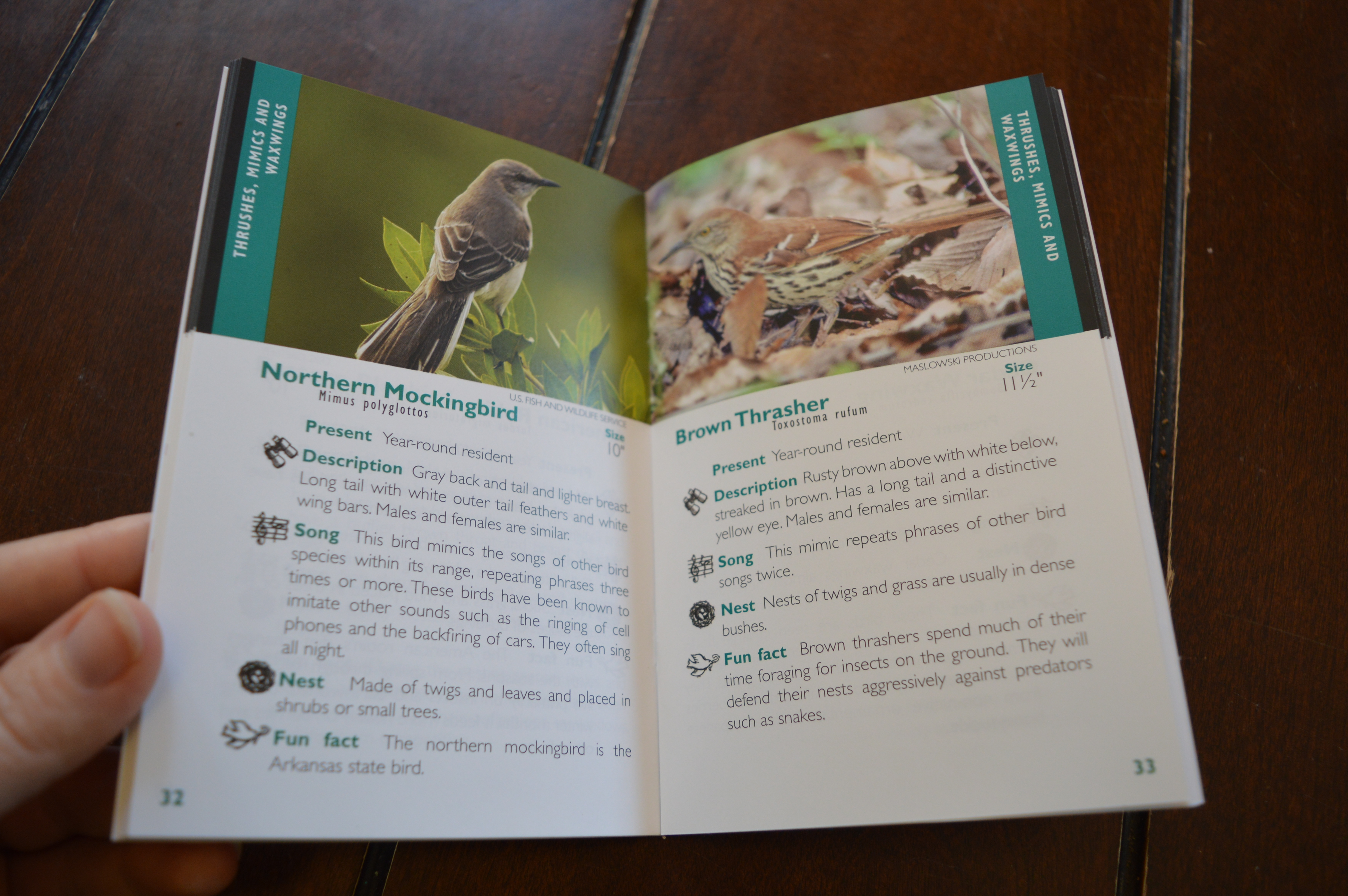 Finding Cheap Or FREE Resources For Bird Nature Study