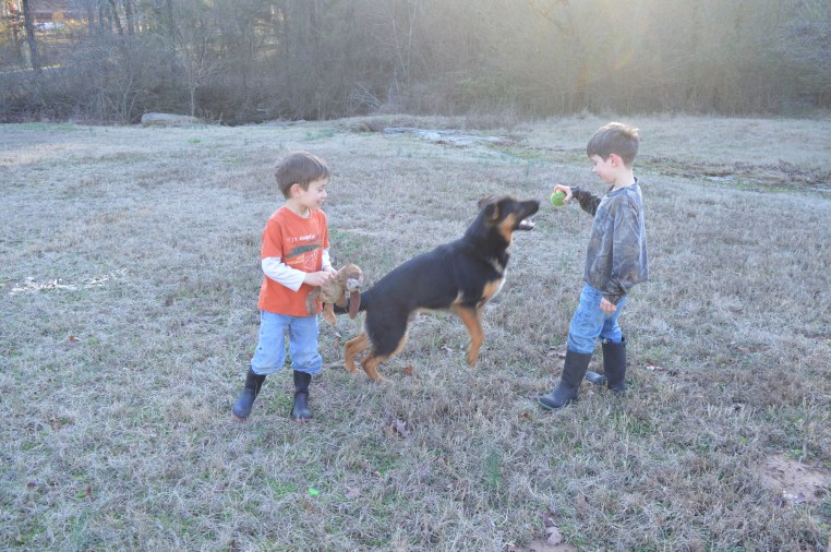 german shepherd dog boys